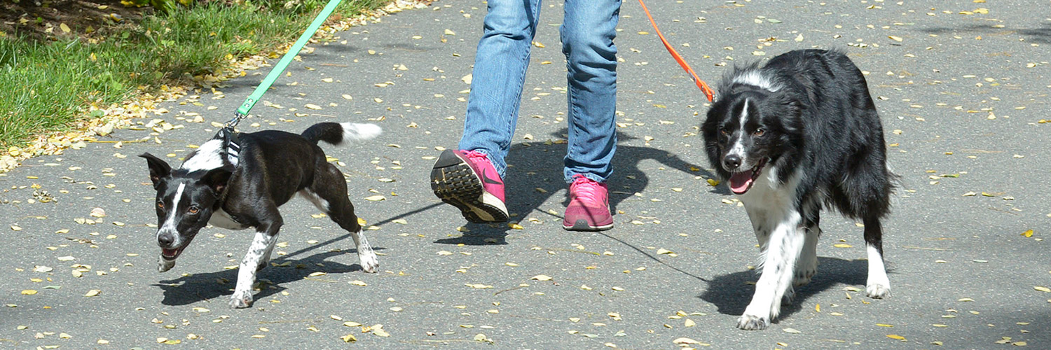 Professional Daily Dog Walking, Dog Play Groups, Puppy Visits and In-Home Cat and Pet Sitting